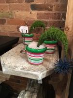 Adorbs Seuss style plants $15 ea